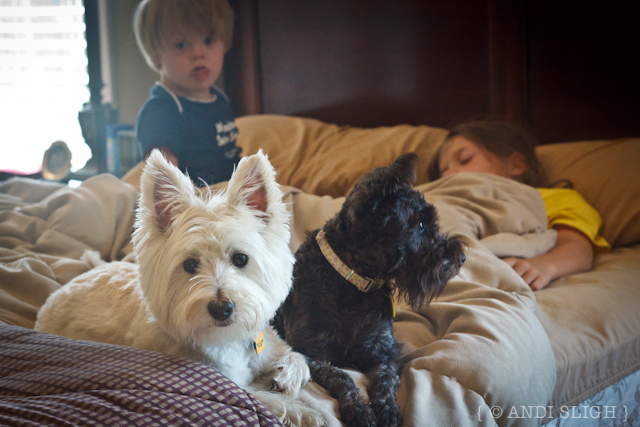 dogs, Daisy, Stella, Nathan, Sarah Kate