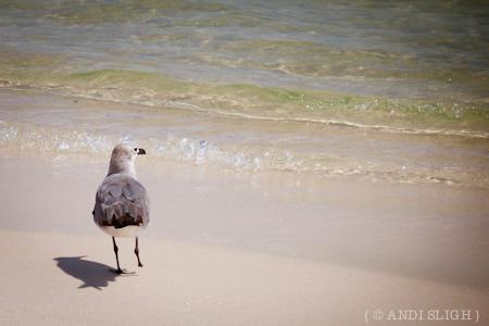 seagull, disability, beach